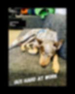 Wholefood Pet Market, Gold Coast, Pet Shop, Miami