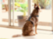 Haqihana Harness, Wholefood Pet Market, Miami Gold Coast, Healthy Pets