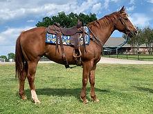 tiger leo right side saddle.jpg
