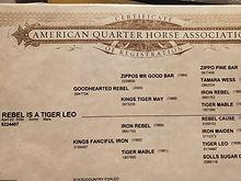 beths horse papers.jpg
