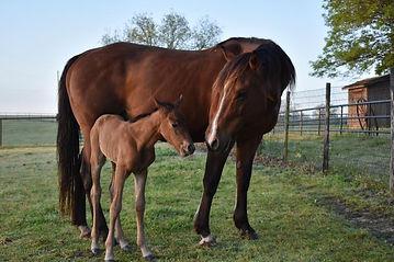 anndee newborn.jpg