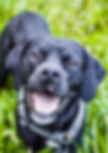 Weingut Staab - Familienhund Ben