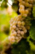 Weingut Staab - Kerner