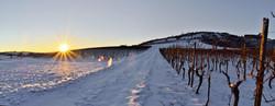 Weinberge im Schnee