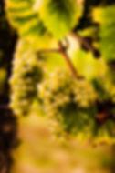 Weingut Staab - Weißburgunder