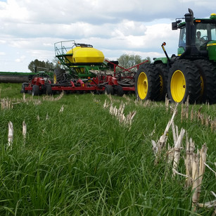 Planting green - soys in 2016