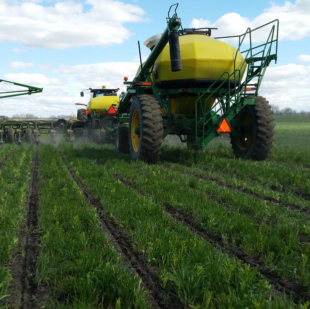 Planting corn into strips 2016