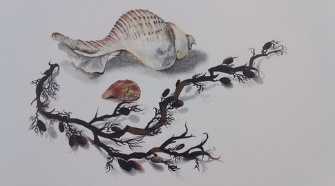 Washed Up #4 - 43cm x 54cm framed  -  Pencil and Ink - SOLD