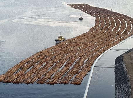 Saimaalla jopa kilometrin mittaisia puulasteja