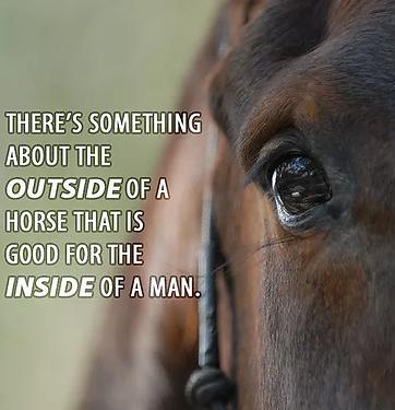 Bilde hest og terapi1.webp