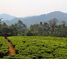Alice Burgess_Rwanda2.png