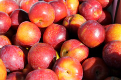 Harwarden Organics