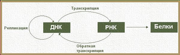 pol-russ11.png