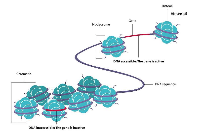 Gene 6.jpg