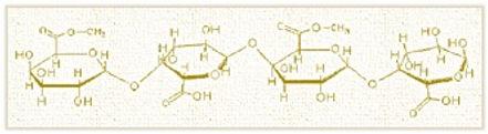 pectin 2.jpg