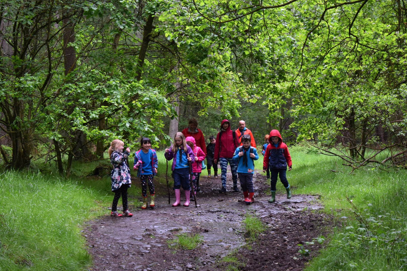 Beavers on a Woodland Walk