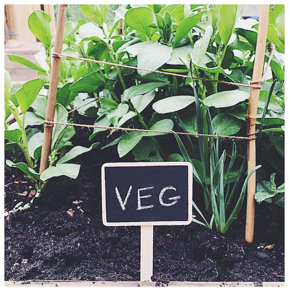 Vegetables in a garden, labelled Veg