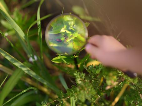 Understanding Schemas: behavioural patterns offering a window into children's learning