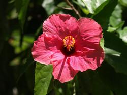 Rote Blume vor grünem Hintergrund
