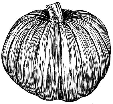 Pumpkin_(PSF).png