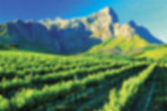 WINELANDS-1.jpg