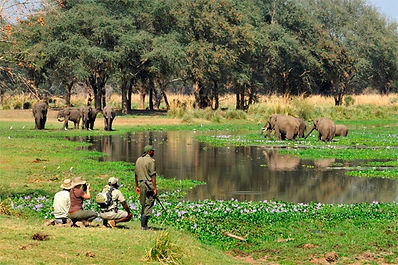Zambia Safari Pricing