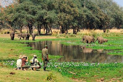 ZAMBIA-WALKING-SAFARI.jpg