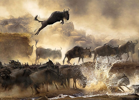 1-SERENGETI-MIGRATION.jpg