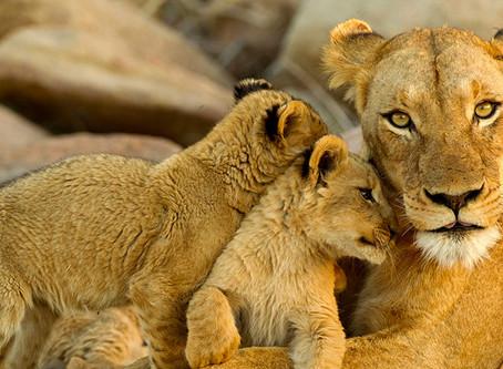 Kruger Park Safari Guide