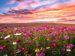 FLOWERS-NEW-5.jpg