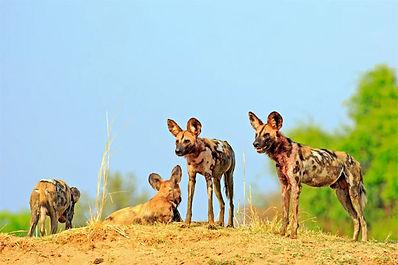 Zimbabawe Safari Pricing
