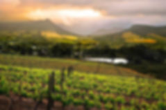 2-CONSTANTIA-VINEYARDS.jpg