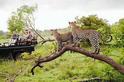 South Africa Honeymoons