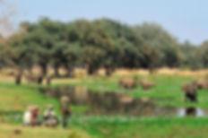 ZAMBIA WALKING SAFARI.jpg