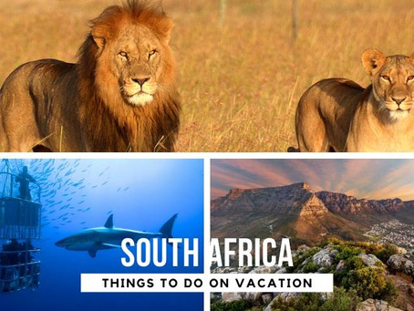 Top 5 Things to Do in South Africa on Vacation in 2020/21