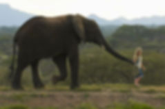 JABULANI-ELEPHANT-WALKING.jpg