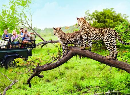 African Safaris Top 5 Destinations Reviewed