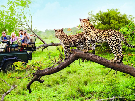 African Safaris Top 5 Destinations Reviewed