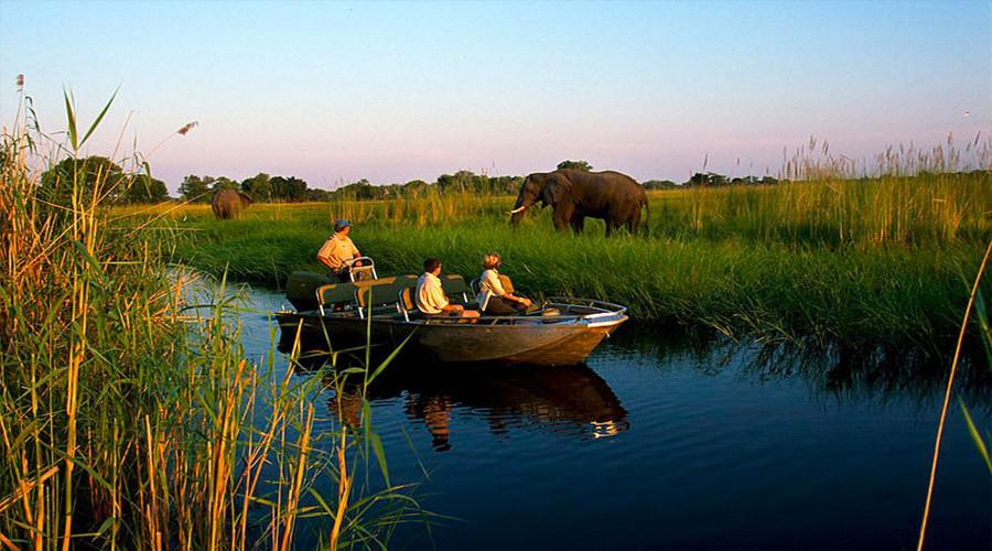 Wildlife Safari with Elephants