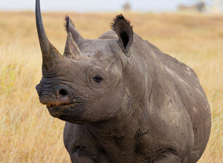 10 Endangered Animals to See Before They're Gone