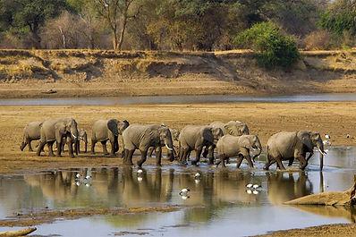 Luangwa Safaris