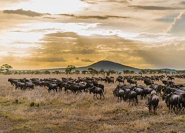 Serengeti Great Migration Safari
