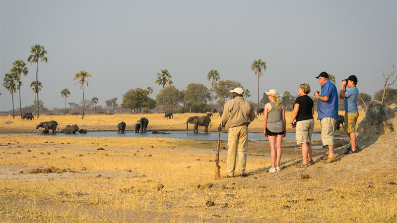 Elephant bathe on a walking safari in Zimbabwe