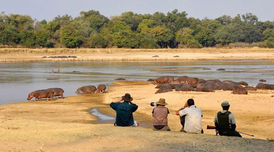 Zambia African Safari Pricing