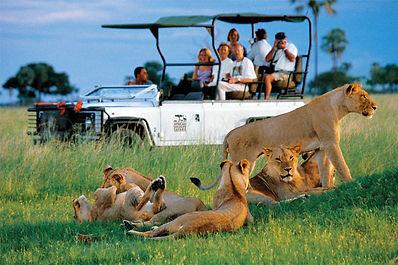 WILDLIFE-SAFARI-BOTSWANA.jpg
