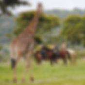 7-HORSEBACK-SAFARI.jpg