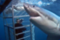 5-SHARK-CAGE-DIVING.jpg
