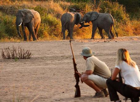 Best Walking Safaris in Africa