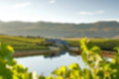 HERMANUS WINERIES
