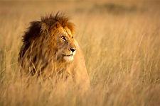 Kruger National Pa